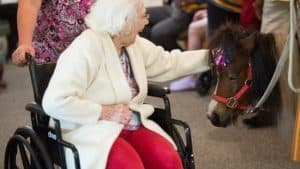Senior woman in wheelchair with pony